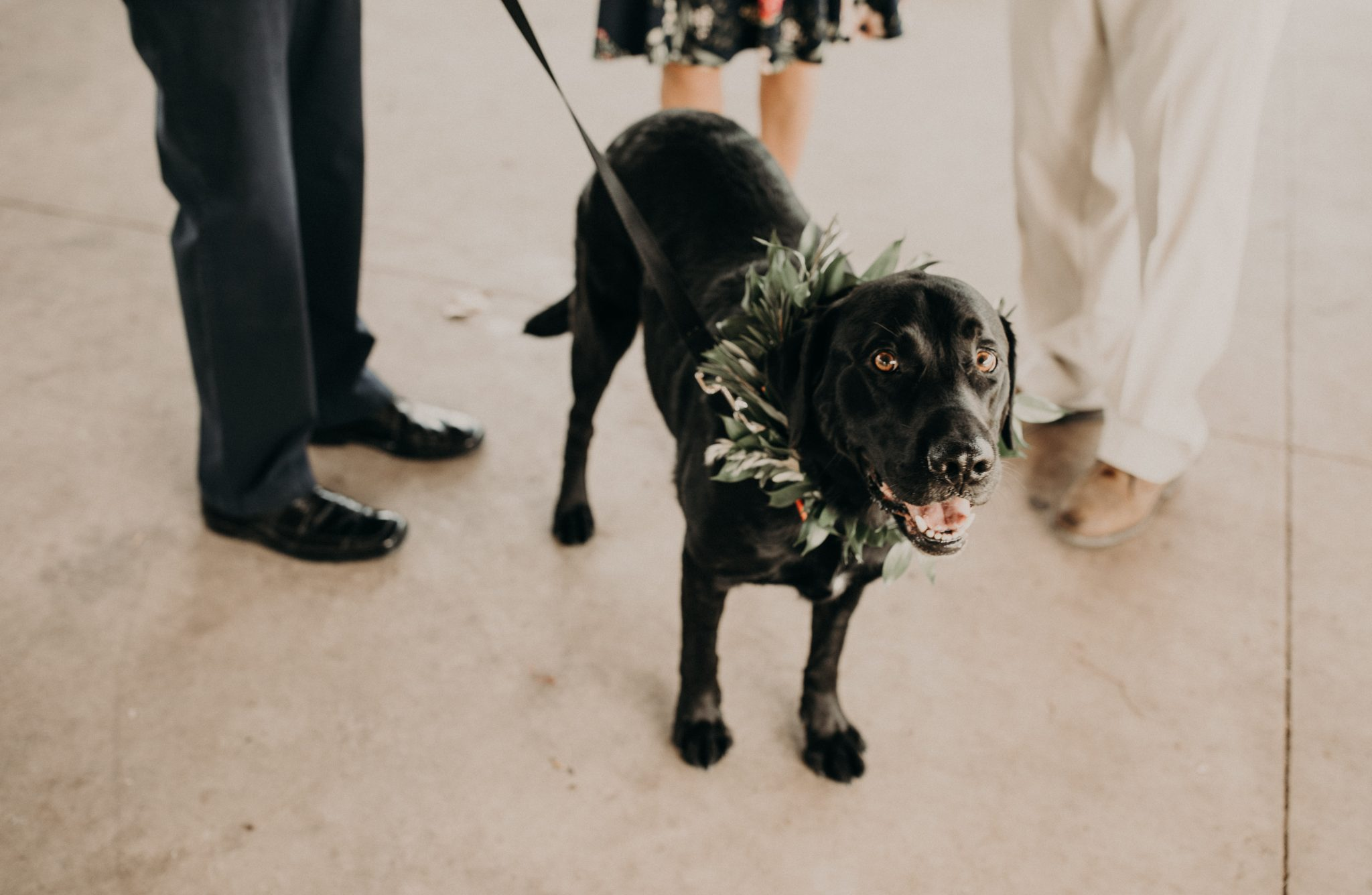 A black lab on a black leash standing between 3 people and staring up at the camera by the San Marcos River in Texas. Photograph by Austin, Texas wedding photographer Nikk Nguyen.
